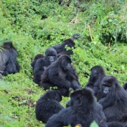 Be Gorilla Friendly™, Take the Tourism Survey and Make a Difference!