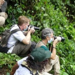 INFECTIOUS DISEASES: Safeguarding the Future for Mountain Gorillas