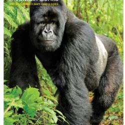 Mountain_gorilla_-_WWF_wildlife_and_climate_change_series