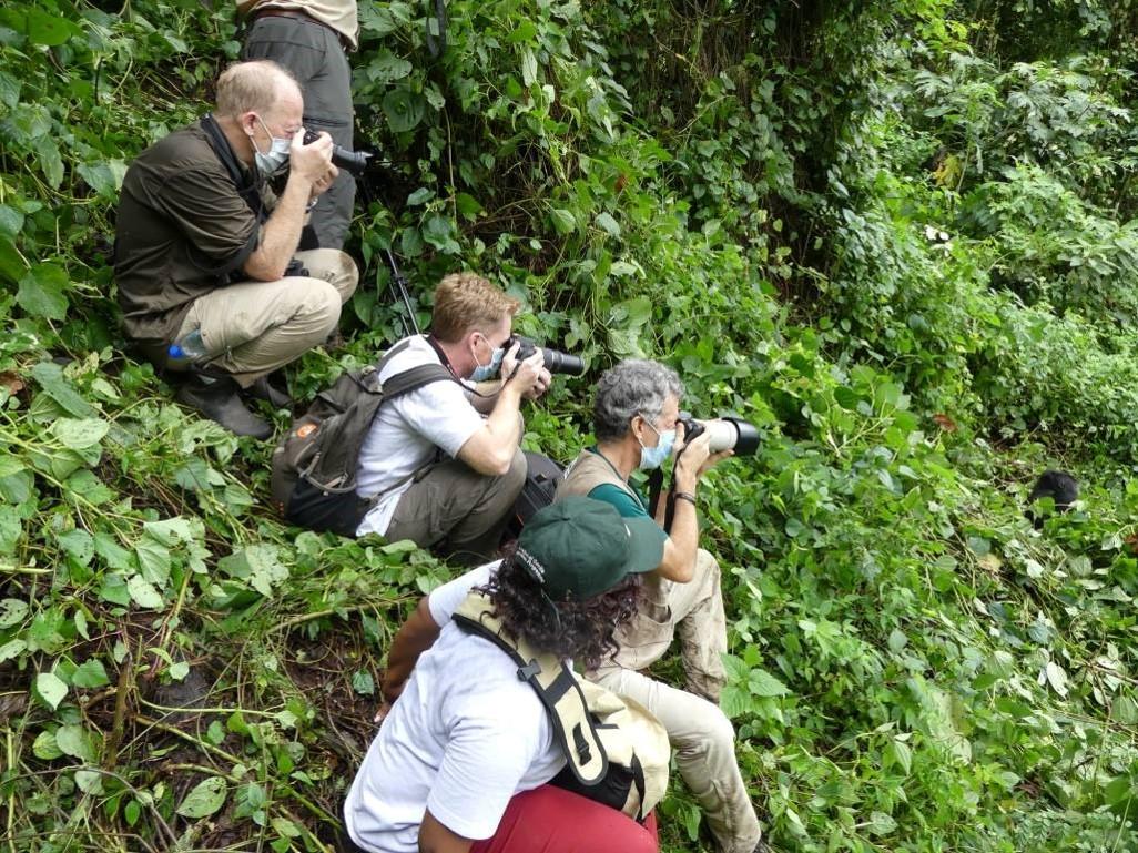 Covid-19 and Mountain Gorillas