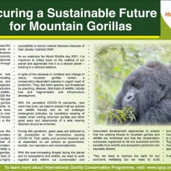 Securing a Sustainable Future for Mountain Gorillas