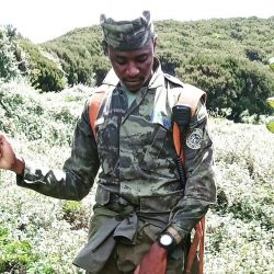 Ranger Voices on Mountain Gorilla Conservation!