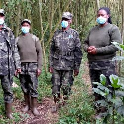 Rangers: Going Against all Odds to Protect the Endangered Mountain Gorillas!
