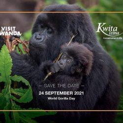 Save The Date! Rwanda to Name 24 Mountain Gorilla Babies!